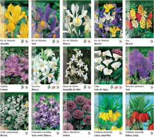Bulbos y semillas de oto o - Bulbos de otono ...